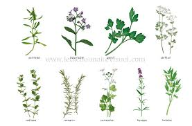 herbes cuisine alimentation et cuisine alimentation fines herbes image