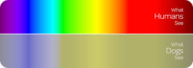 Colors That Color Blind Can See How Do Dogs See The Different Colored Lights Aren U0027t Dogs