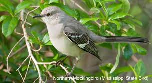 Mississippi birds images Mississippi wild birds wild bird co bird feeding watching jpg