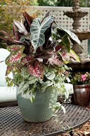 Summer Container Garden Ideas 168 Best Summer Containers Images On Pinterest Container Plants