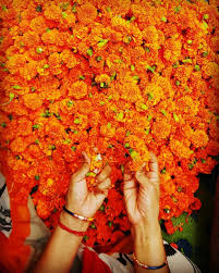 30 photos that proves orange color is the most beautiful color to