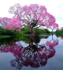 most beautiful trees the most beautiful tree trees
