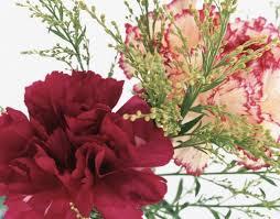 *•~-.¸¸,.-~*زهور اسلاميه*•~-.¸¸,.-~* images?q=tbn:ANd9GcQ0bwatKfsPU0LvuuMkLZrhnZetymii92uxt1l4VQiOWWJtYS9k_Q