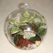 15 best hoya terrariums images on pinterest succulent plants