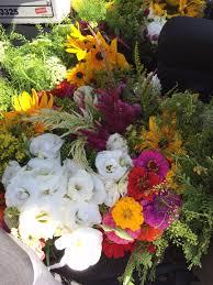 Bulk Flowers About U2013 Painted Lady Flower Farm
