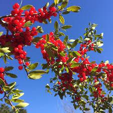 native plants for birds gardening for wildlife with native plants with david mizejewski