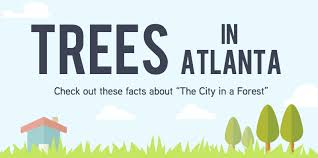 an inside look at the numbers for the city in a forest