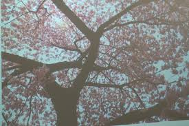 cherry blossom tree art room 104 kindergarten cherry blossom trees