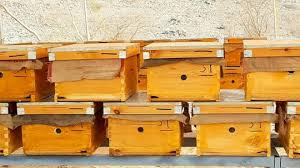 5 best bee boxes for sale mybeeline
