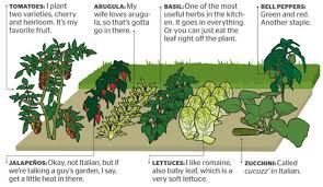 Garden Plot Layout How To Grow Your Own Food For Increased Security Health