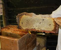 Harvesting Honey From Top Bar Hive Langstroth Hive Wikipedia