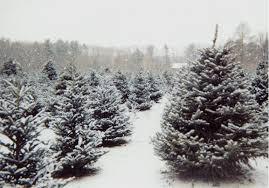 the annual christmas tree hunt