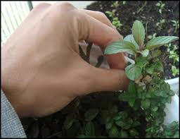 vegetable gardening tips and tricks for beginners how to easily