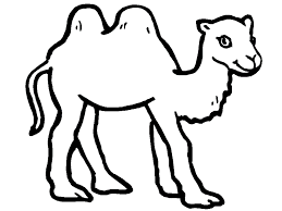 free animals kamel printable coloring pages for preschool camel