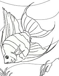 100 ideas printable fish pictures emergingartspdx