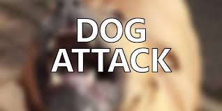 Boyertown Pa Halloween Parade Route by Pa Fatal Dog Attack Pit Bull Mix Was Still Attacking Owner When