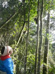 Under Canopy Rainforest by Madagascar Team Tracks Lemurs As They Spread The Seeds Of The