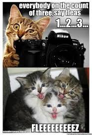 Cute Funny Cat Memes - google image result for http img ibtimes com www data images full