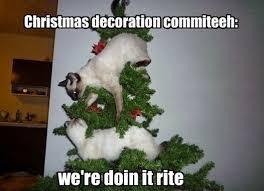 Cat Christmas Memes - image christmas cat meme 19123 jpg animal jam clans wiki