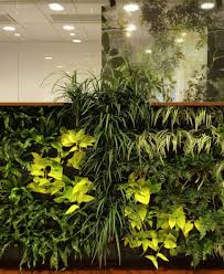 office plants for sale very low light houseplants decorating with