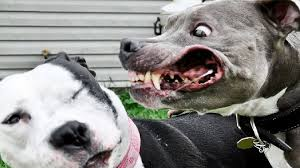 5 most dangerous dog breeds youtube
