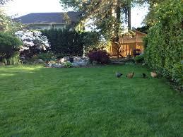 raising urban chickens lavender u0026 fir
