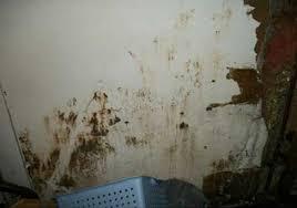 Wet Basement Waterproofing - waterproofing basement drywall terrafirma foundation systems