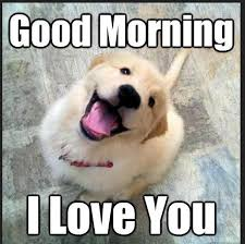 Cute Good Morning Meme - good morning memes images free download good morning images