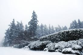 Snow Falls In Tokyo For The First Time In November Since 1962 by The Intercontinental Gardener 2008