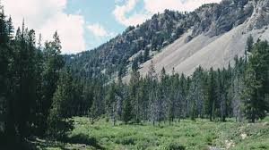 Wyoming forest images Bridger teton national forest jackson travel wyoming that 39 s wy jpg