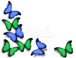 Blue And Green Butterfly - blue green butterflies isolated on white background stock photos