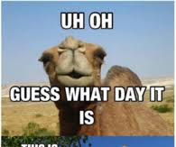 Happy Hump Day Memes - hump day camel pictures photos images and pics for facebook