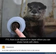 Sea Otter Meme - 68 best otter memes images on pinterest funny stuff funny humor