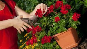 balkon grã npflanzen die besten beet und balkonpflanzen des jahres 2016