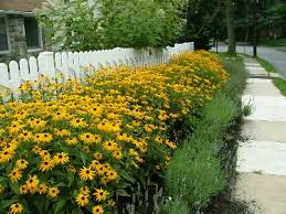 Summer Flowers For Garden - my favorite perennials for the philadelphia area newtown square