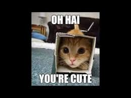 Kittens Memes - kitten memes in 42 seconds youtube
