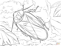 cockroach coloring pages free coloring pages