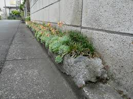 curbside garden space in concrete and rocks fixes