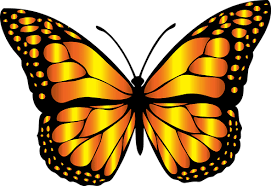 monarch butterfly images pixabay free pictures