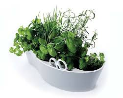 Kitchen Herb Garden Kit How To Create A Herb Garden In Your Kitchen Cooking Tools