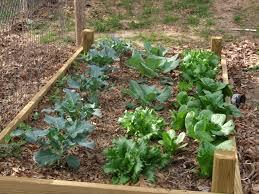 design home vegetable garden