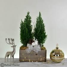 european cypress tree p38 rafael florist