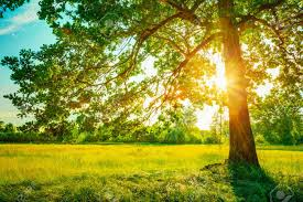 summer forest trees and green grass nature wood sunlight