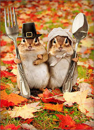chipmunk humorous thanksgiving card by avanti press