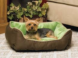 small pet beds here for comfortable small dog beds