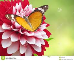 butterfly on a flower stock photos image 23417093
