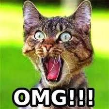 Omg Cat Meme - oh my god omg meme collection