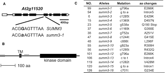 the nlr protein summ2 senses the disruption of an immune signaling