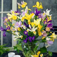 iris flower bulbs garden plants u0026 flowers the home depot