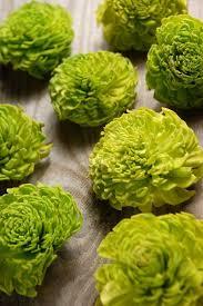 Lime Green Flowers - best 25 green carnation ideas on pinterest square vase